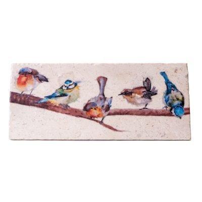 Birds Sharing Platter