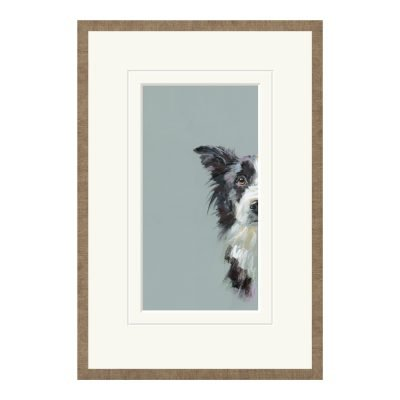 Curious Collie Framed Print